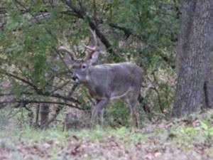 The buck
